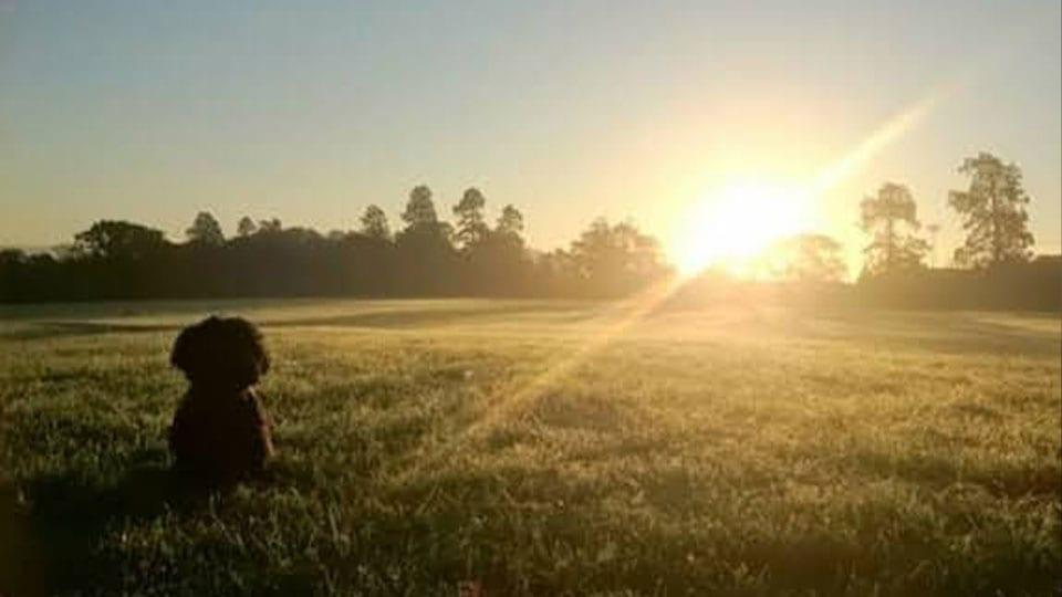 Dog Field Heartspace Meditation