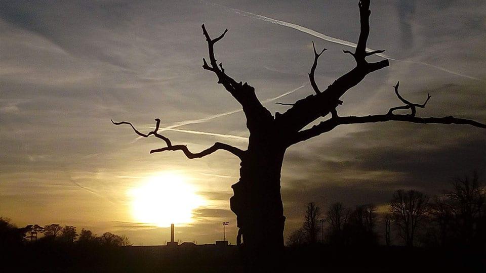 Tree Silhouette sunset Heartspace Meditation 1920x540